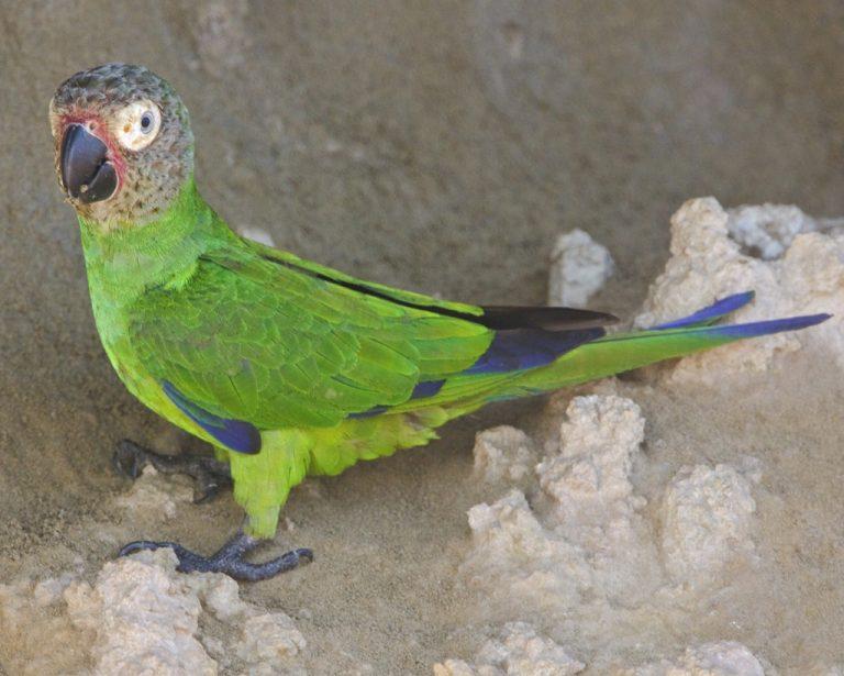 Фото: audubon