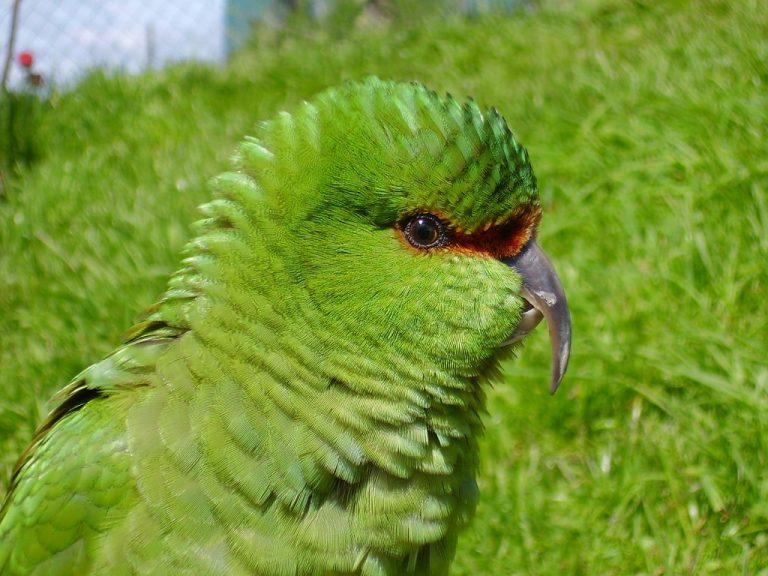 Фото: Орнитология. Птицы мира