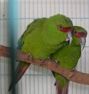 Изумрудные попугаи