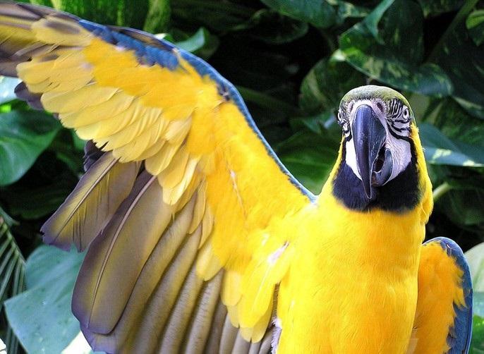 крылья попугая