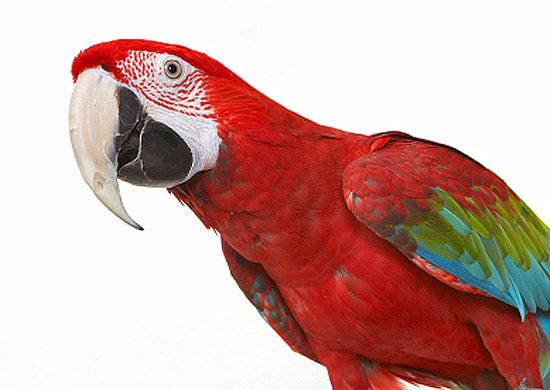 новая птица