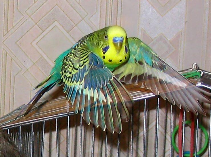 полет попугая