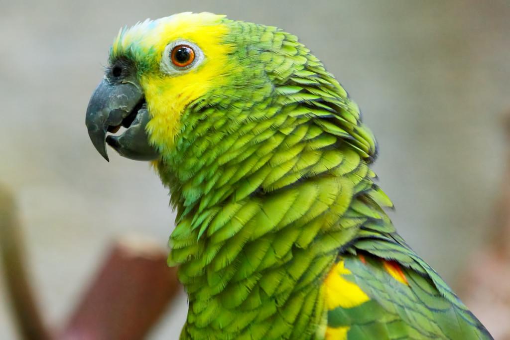 Как сделать гнездо попугаю своими руками