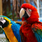 Большие попугаи