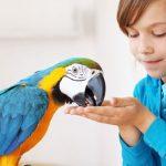 Приручение попугая к руке