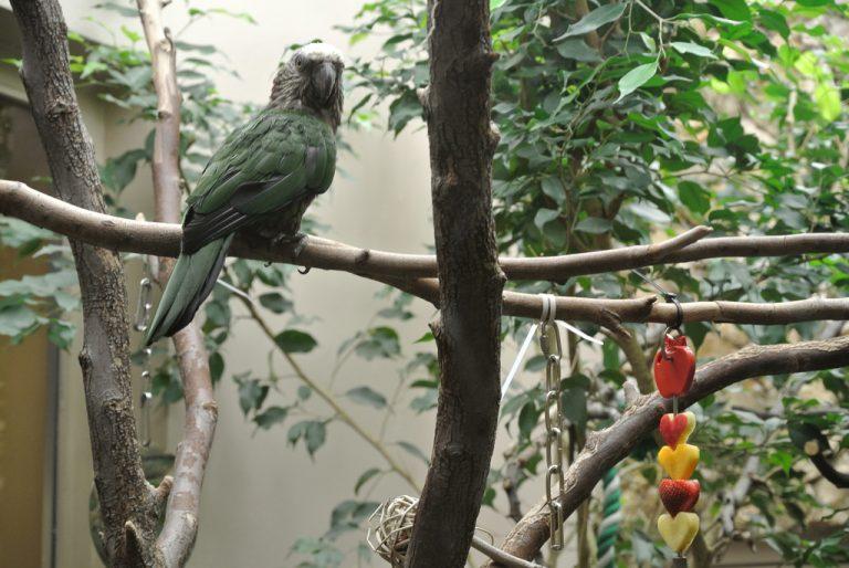 Фото: Smithsonian's National Zoo