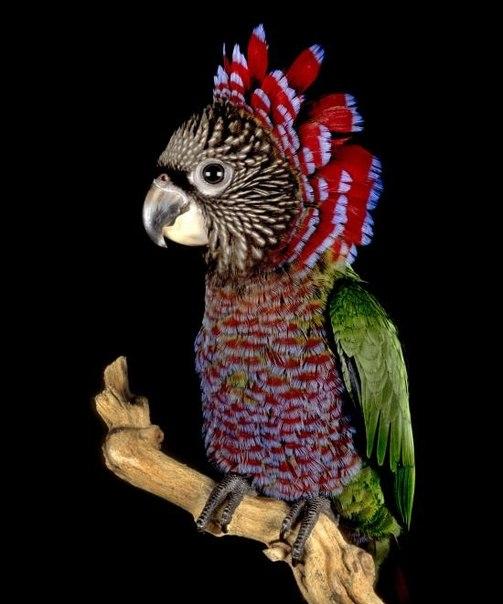 Фото: parrots