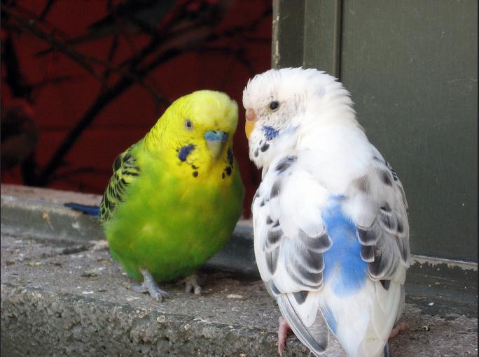 Маленькие птички с большим сердцем
