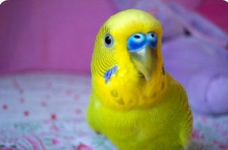 Яркий взгляд у попугая