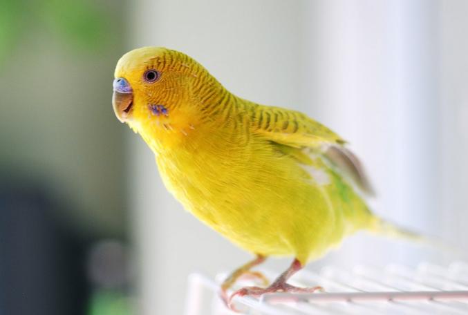 Молодые птички не сразу летают