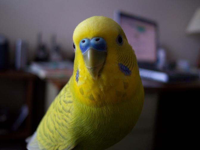 Запущенное заболевание глаз может стать причиной гибели птицы