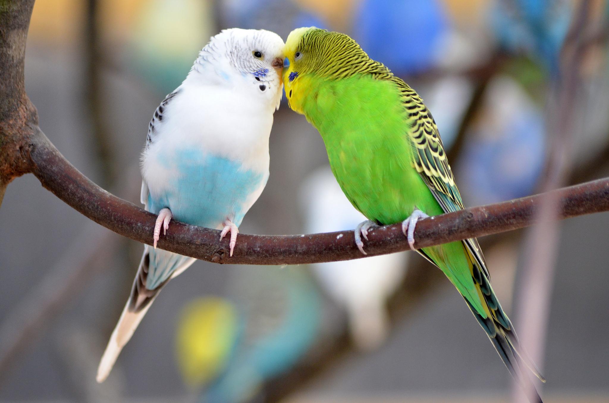 таким людям строение попугая фото логично