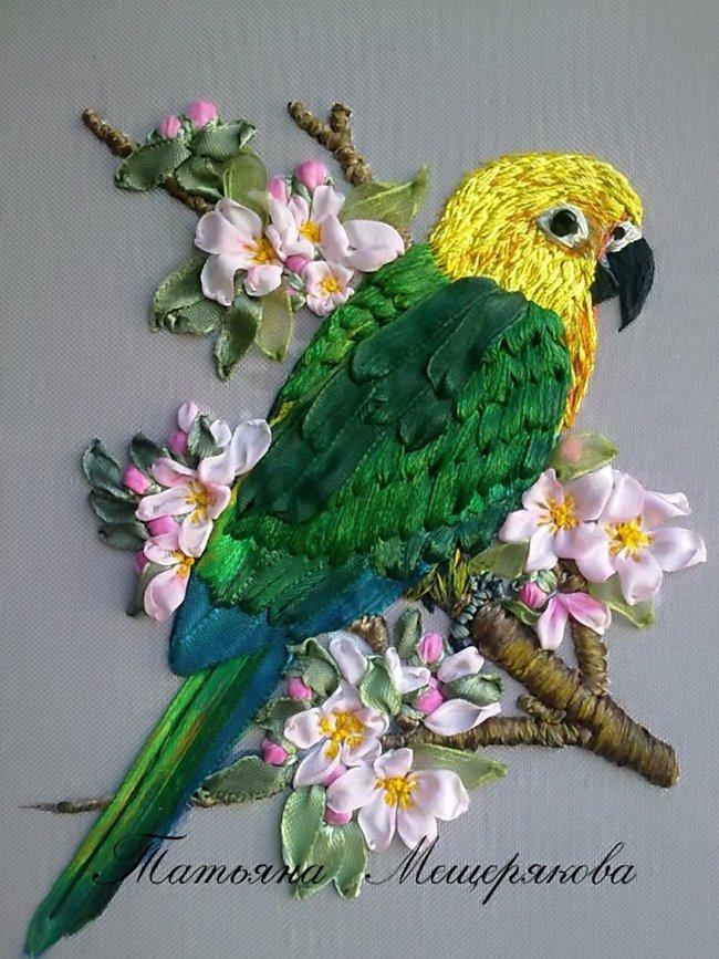 ленты попугай
