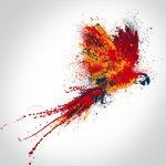 Как сделать попугая: рисование, вышивание, поделки
