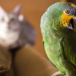 Попугаи и другие домашние питомцы