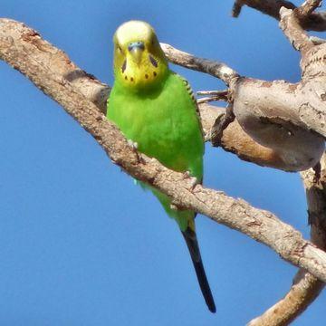 Вызов ветеринара на дом - настоящее спасение для владельца попугаев