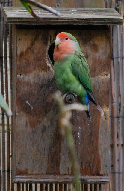Это горизонтальный тип домика для попугая