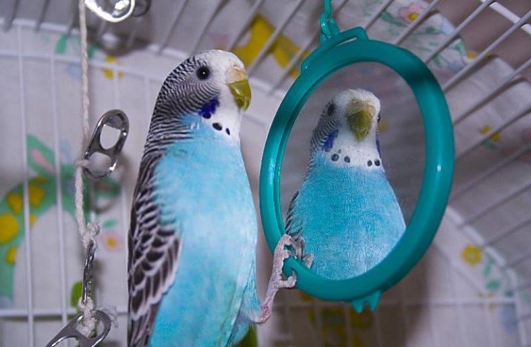 попугай дома, попугай в клетке, общение попугая