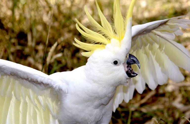 питание попугаев, кормление попугаев, уход за попугаями