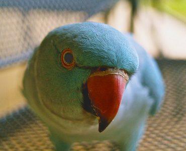 Поведение попугая