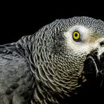 13 интересных фактов про попугаев