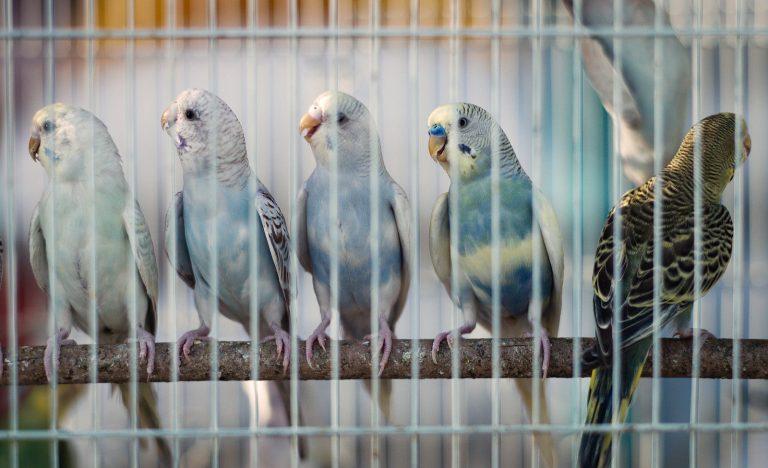 Сколько лет живут различные птицы в том числе вороны и попугаи 7