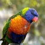 Топ-20 самых интересных фактов о попугаях