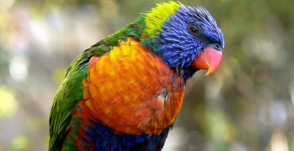 красавец попугай