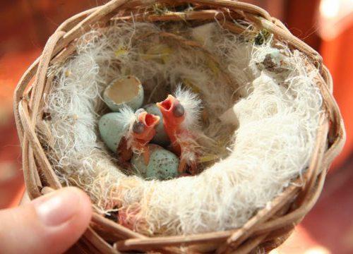 Кормление птенцов попугаев
