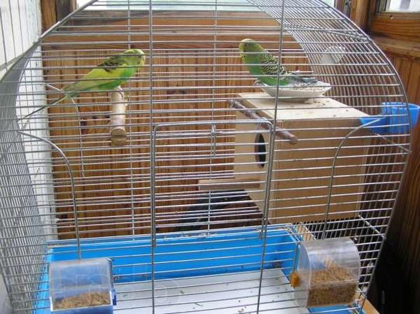 клетка с волнистыми попугаями