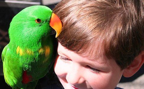 аллергия на попугаев