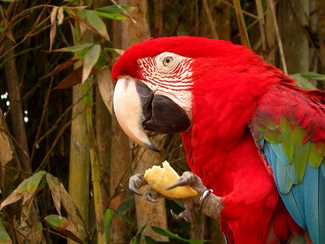 попугай ест