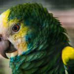 Депрессия у домашних птиц: признаки и рекомендации