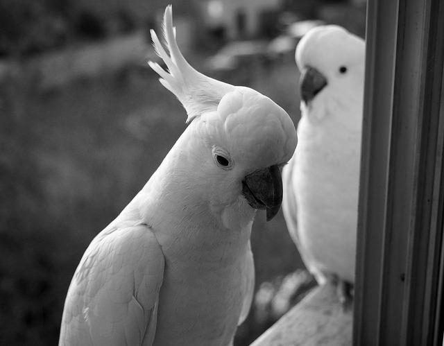 очень грустный попугай