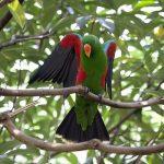 Попугай теряет перья – что делать?