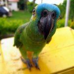 Смешные видео и приколы про попугаев