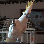 Танцующие попугаи