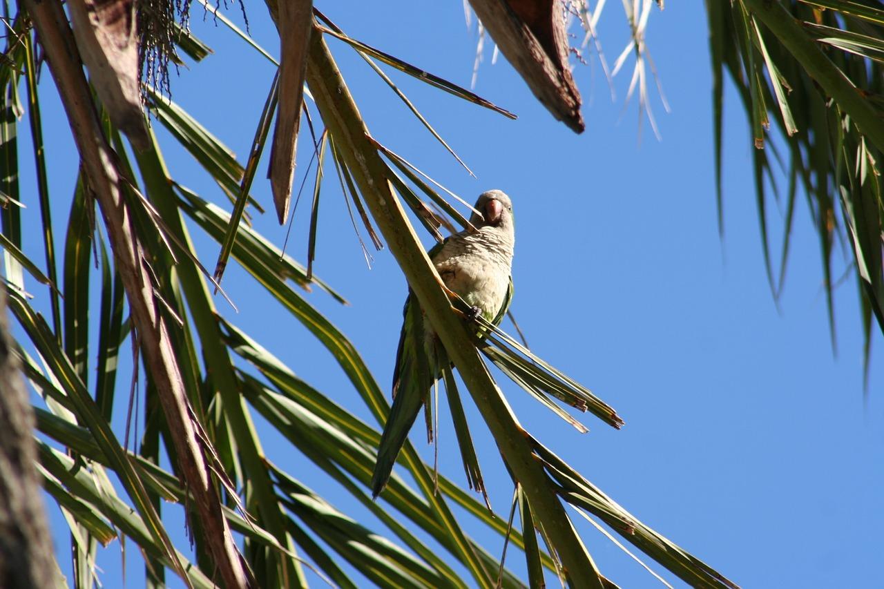 Гнезда попугаев в природе