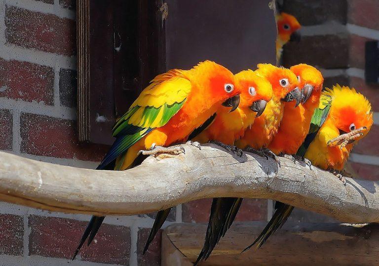 parrots-city