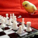 Попугай на английском