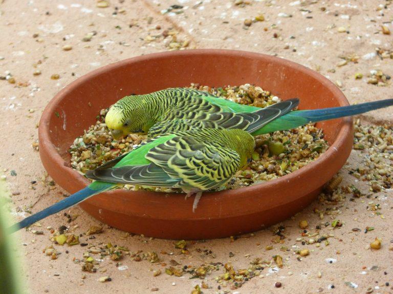 кормление попугаев