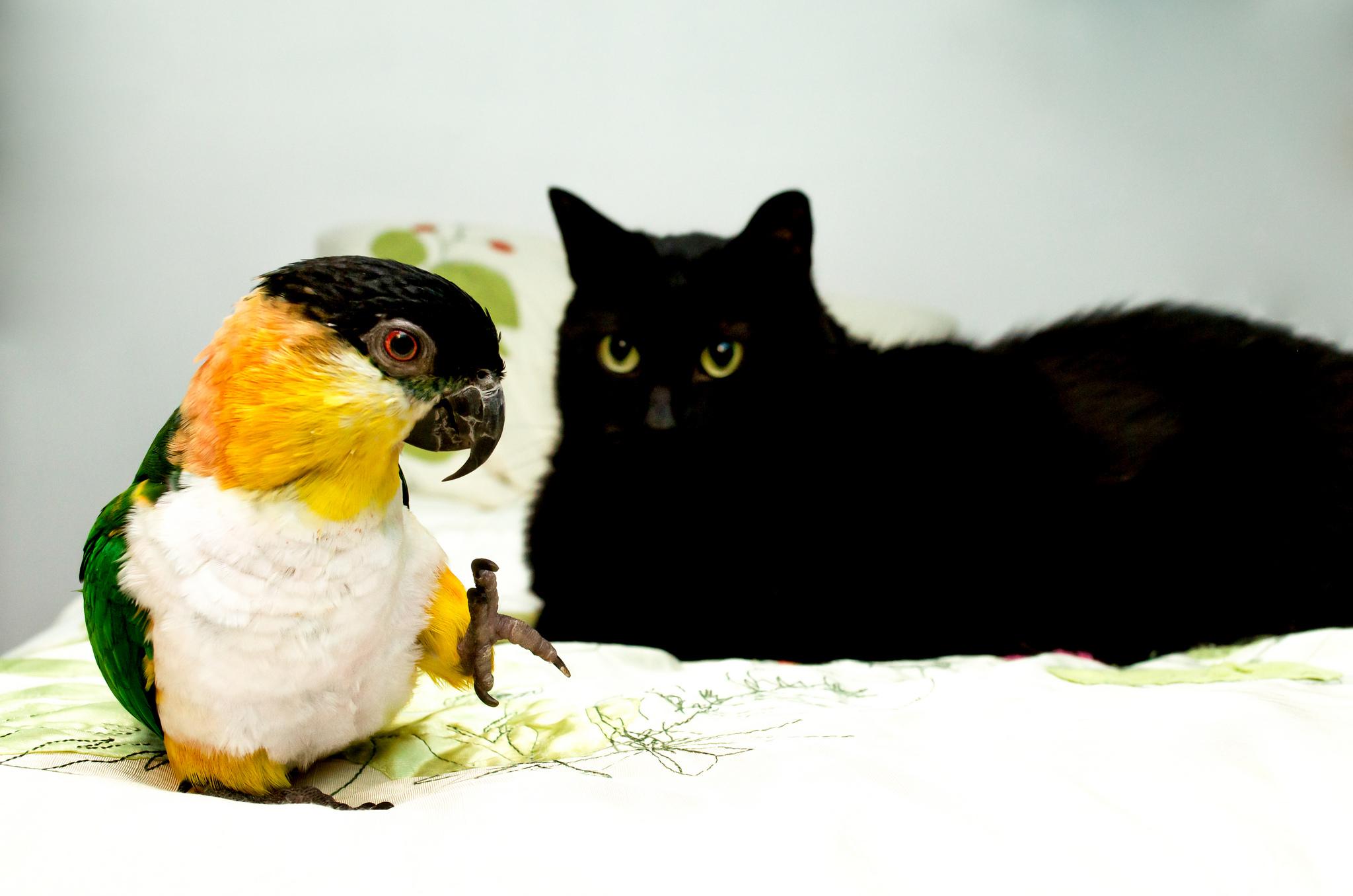 знакомство попугай и щенок