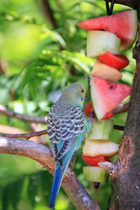 попугай и фрукты