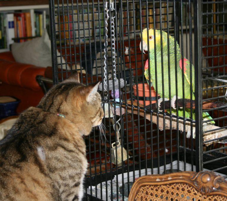 Кот и птица в доме