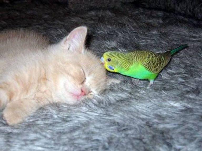 Попугай не даёт коту есть
