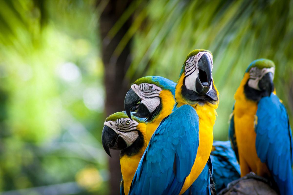 Rainforest parrot white background