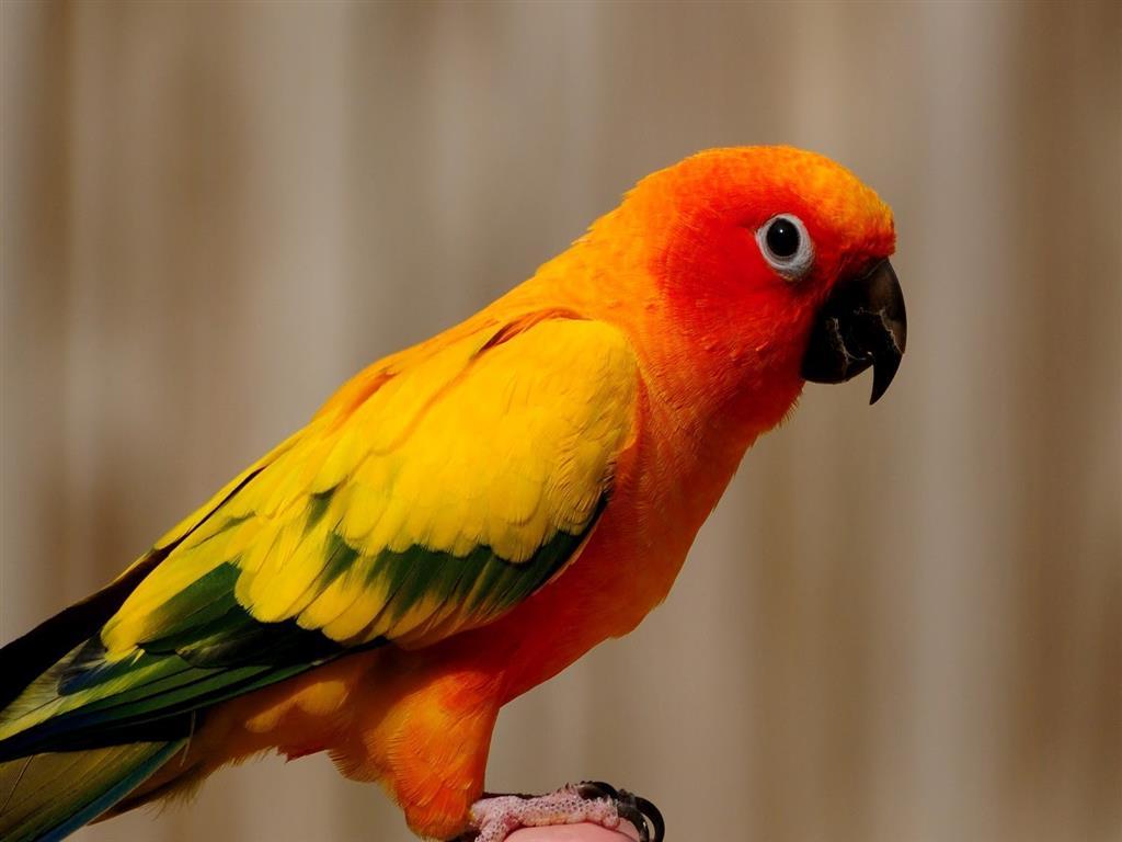 Постели любовью, картинки попугаев красивые