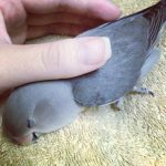 Первая помощь попугаю (аптечка владельца)