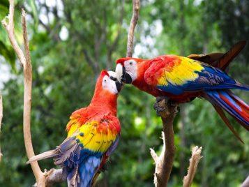 Cute_Love_Bird_Colorful_1280x960
