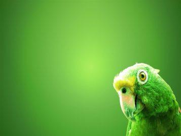 green-parrot1280x960
